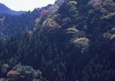 竹树婆娑0180
