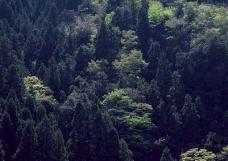 竹树婆娑0173