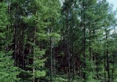竹树婆娑0187