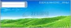 韩国茶林风光PSD模板