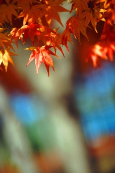 秋天景色0231