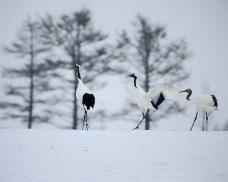 冬天雪景0220