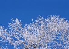冬天雪景0084