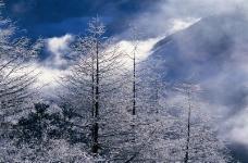 冬天雪景0100