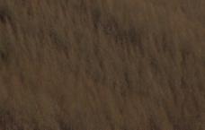 白桦林图片
