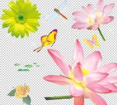 荷花葵花图片