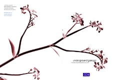 花卉0021