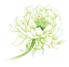 淡雅花卉图片