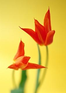 花的彩绘0005