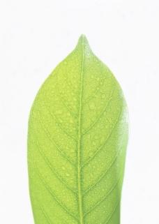 叶子和绿叶0060