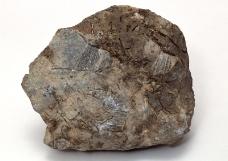 化石0121