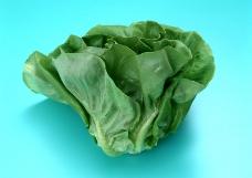 水果蔬菜0228
