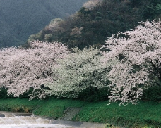 春暖花开0027